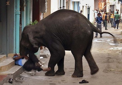 Elephant Attacks in Mysore