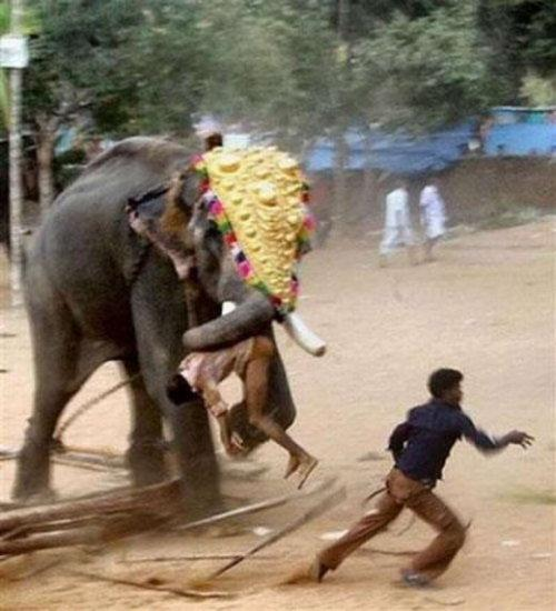 Elephant attacking man 1