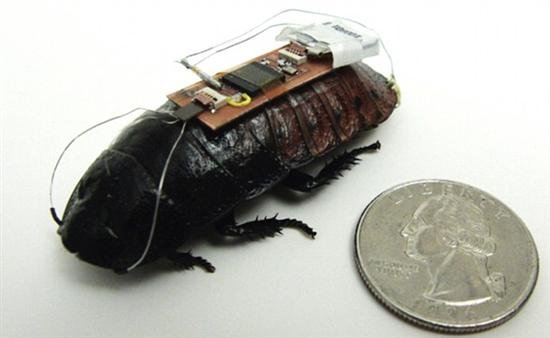 Remote control cockroaches 1