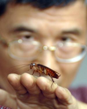 Remote control cockroaches 2