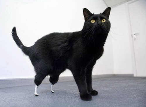 Worlds First Bionic Cat
