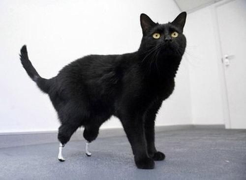 Worlds First Bionic Cat