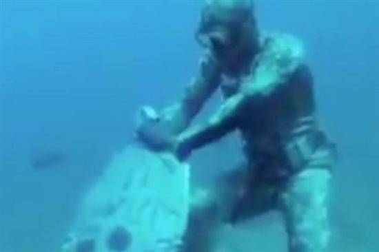 fish attacks diver