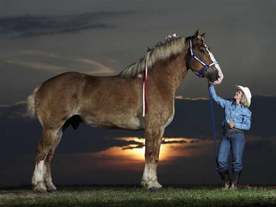 Worlds Tallest Horse