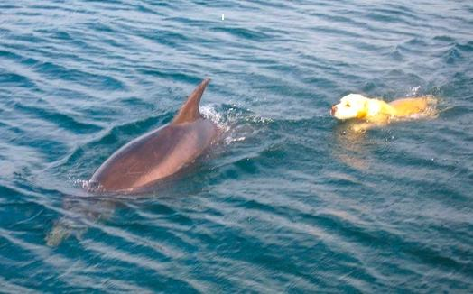 Ben the Dog and Duggie the Dolphin 1