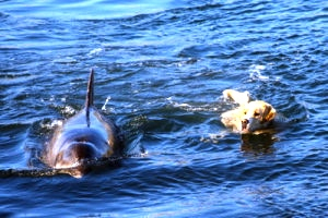 Ben the Dog and Duggie the Dolphin 3