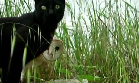 Cat and owl friends 1