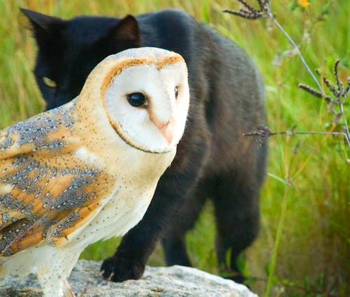 Cat and owl friends 2