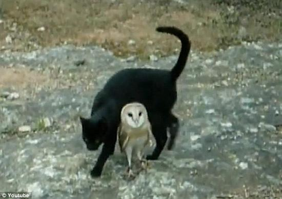 Cat and owl friends 4