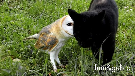 Cat and owl friends 6