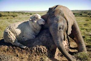 Themba And Albert 2