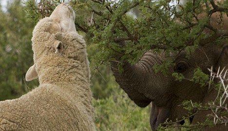 Themba And Albert 6