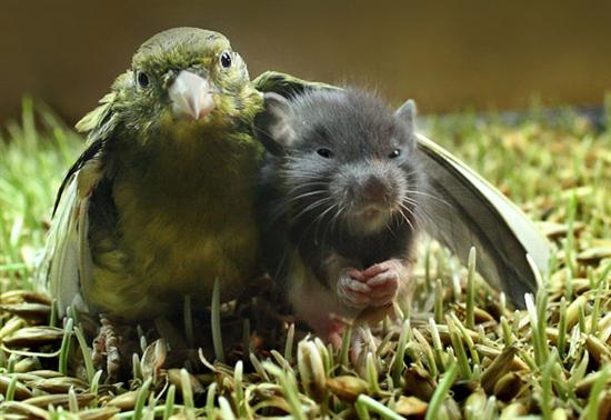 bird mouse 6 Of The Weirdest Animal Friendships Pictures Seen on www.VyperLook.com