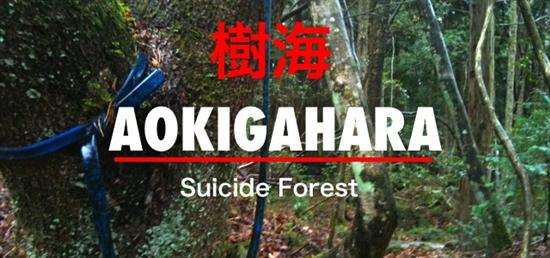 Aokigahara Japan 1