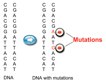 Gene-Mutations