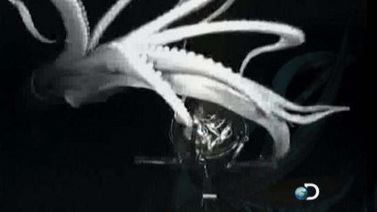 Giant Squid Caught on Tape 3