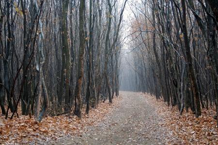 Hoia Baciu forest 1