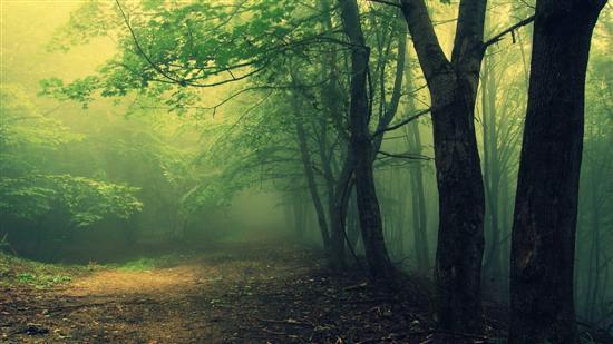 Hoia Baciu forest 2