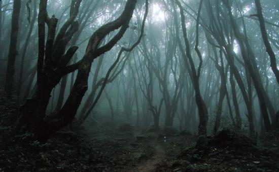 haunted forest 1
