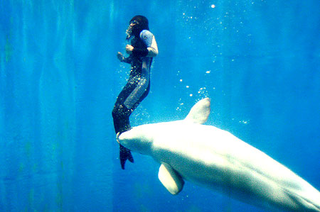 Mila the Beluga whale Top Amazing Stories About Rescue Animals Pictures Seen on www.VyperLook.com