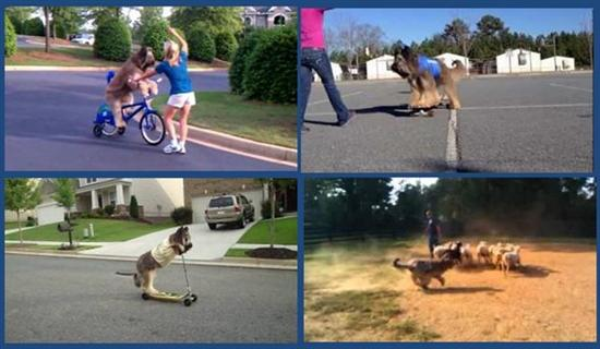 Norman bike riding dog 2