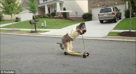 Norman bike riding dog 4
