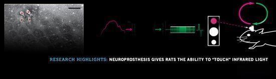 rats sixth sense