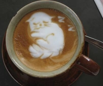 sleeping cat coffee foam art