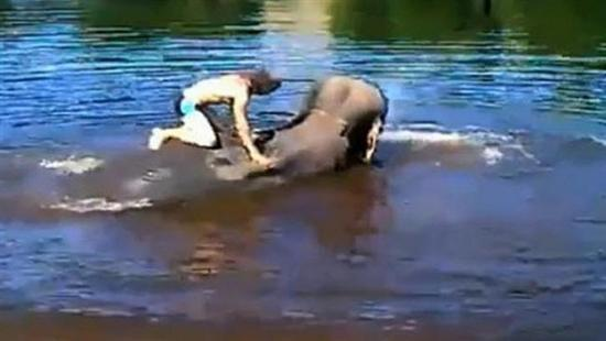 elephant drowning 1