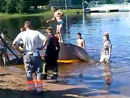 elephant drowning 2