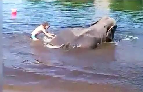 elephant drowning 3