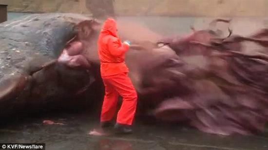 Sperm whale explosion 1