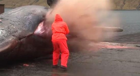 Sperm whale explosion 2