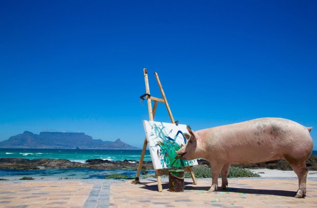 pigcasso painting on the beach