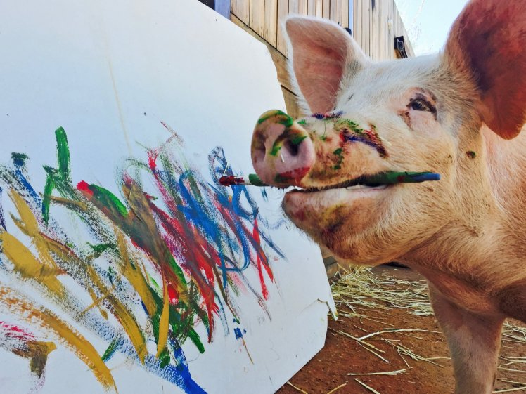 pigcasso the famous painting pig