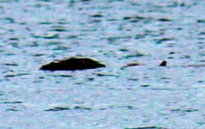 the Loch Ness monster sighting in 2017 700x440