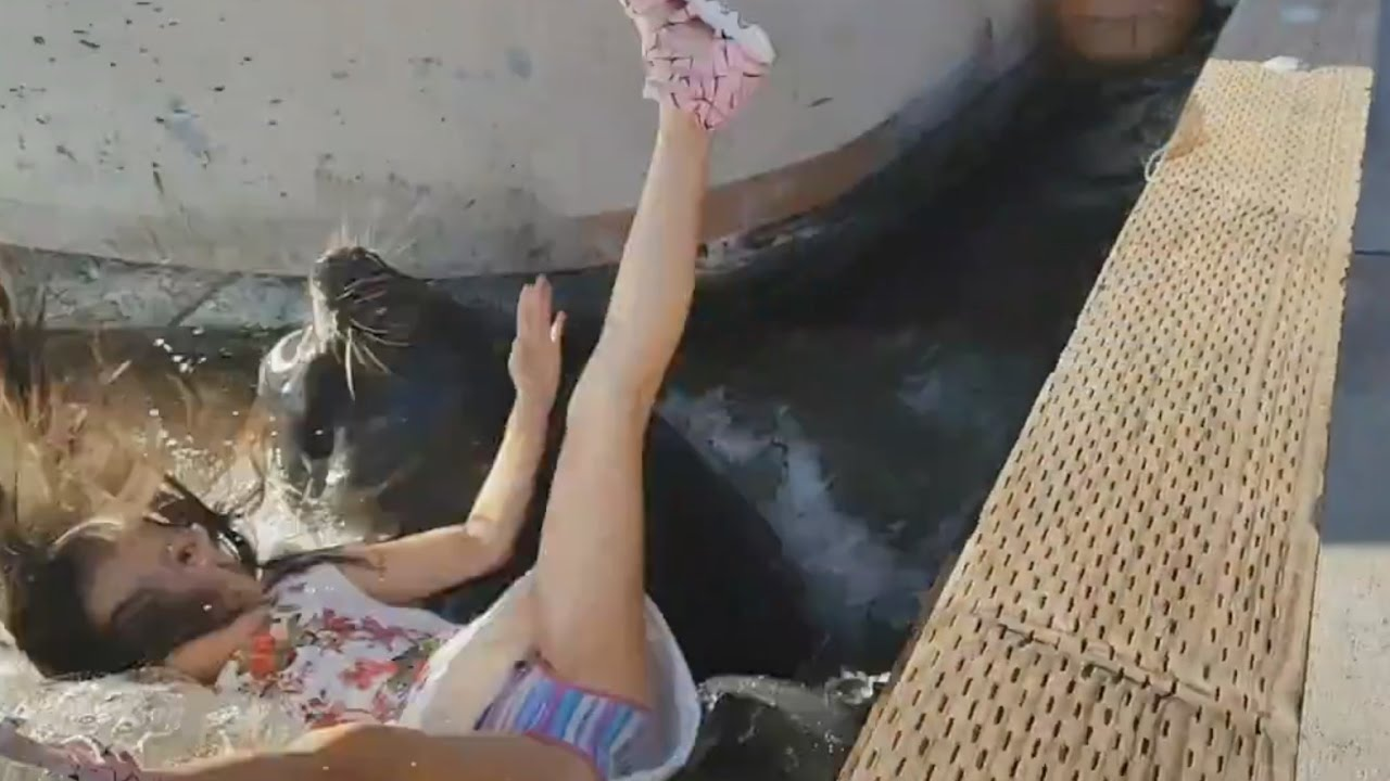 girl pulled into water by seal lion