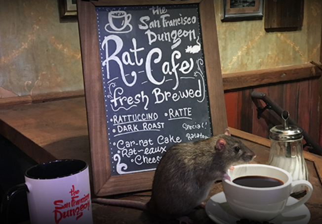 rats cafe san francisco