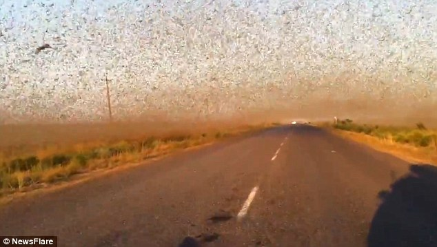 locust invasion in Russia
