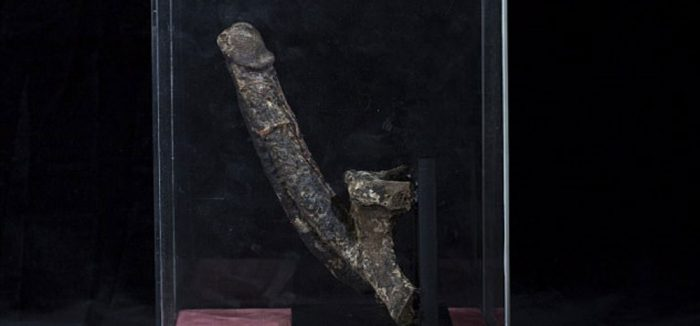 mummified penis