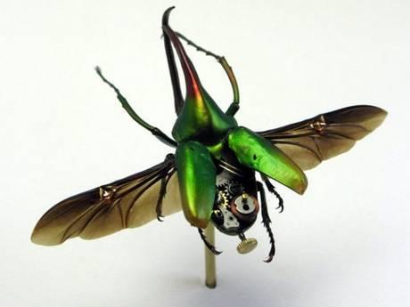 105693mechanical bug14