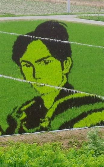 206833Rice Field Art 4