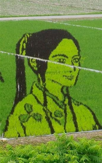 206833Rice Field Art 5