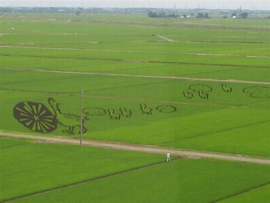 206833Rice Field Art 6