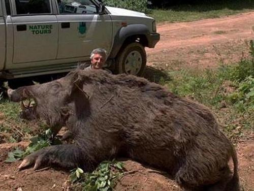 37125416 worlds biggest animals15