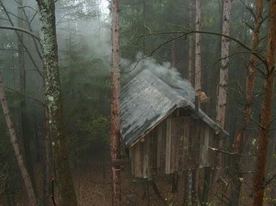 436436beautiful tree houses 05