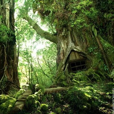 436436beautiful tree houses 09