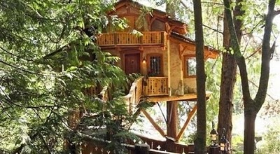 436436beautiful tree houses 11