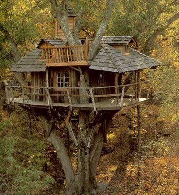 436436beautiful tree houses 17