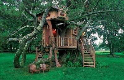 436436beautiful tree houses 20